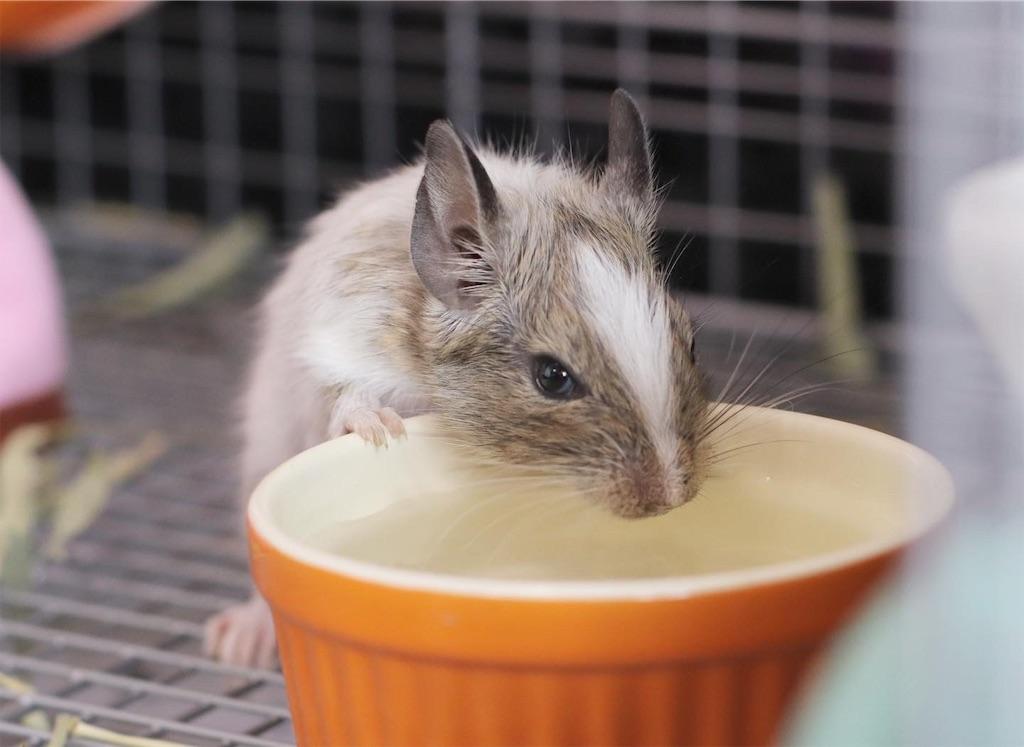 f:id:hamster_nappa:20191112090011j:image