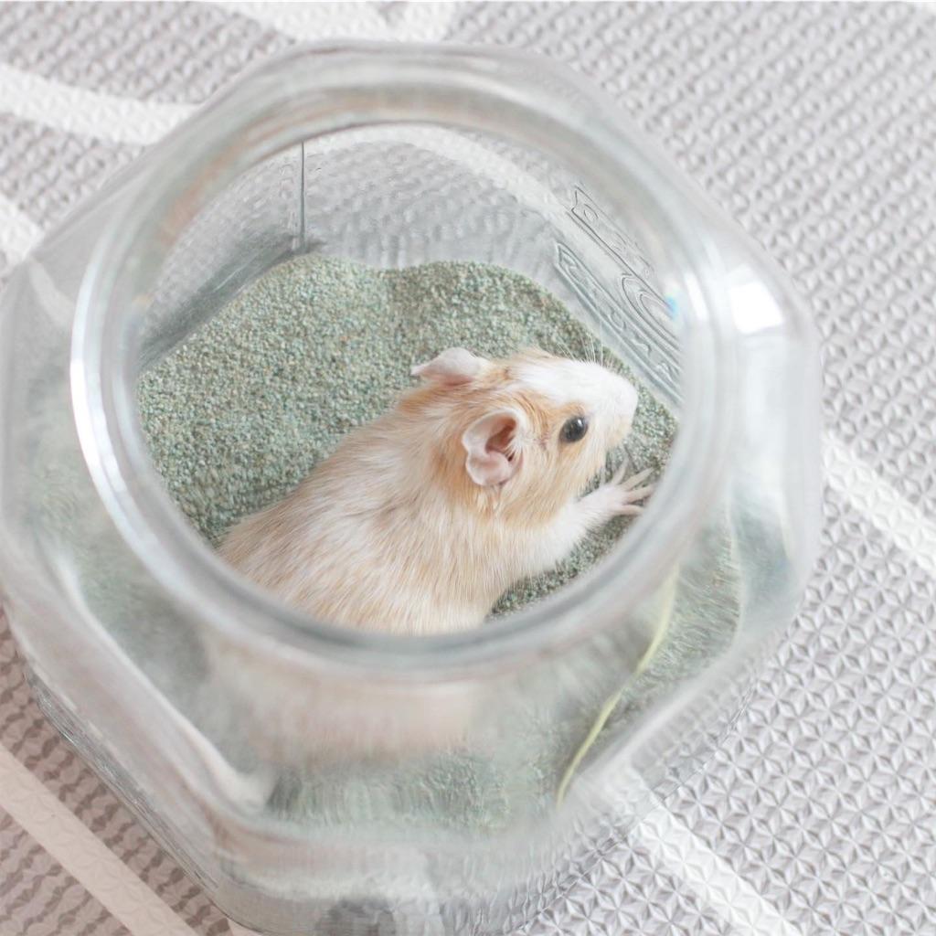 f:id:hamster_nappa:20191210214145j:image