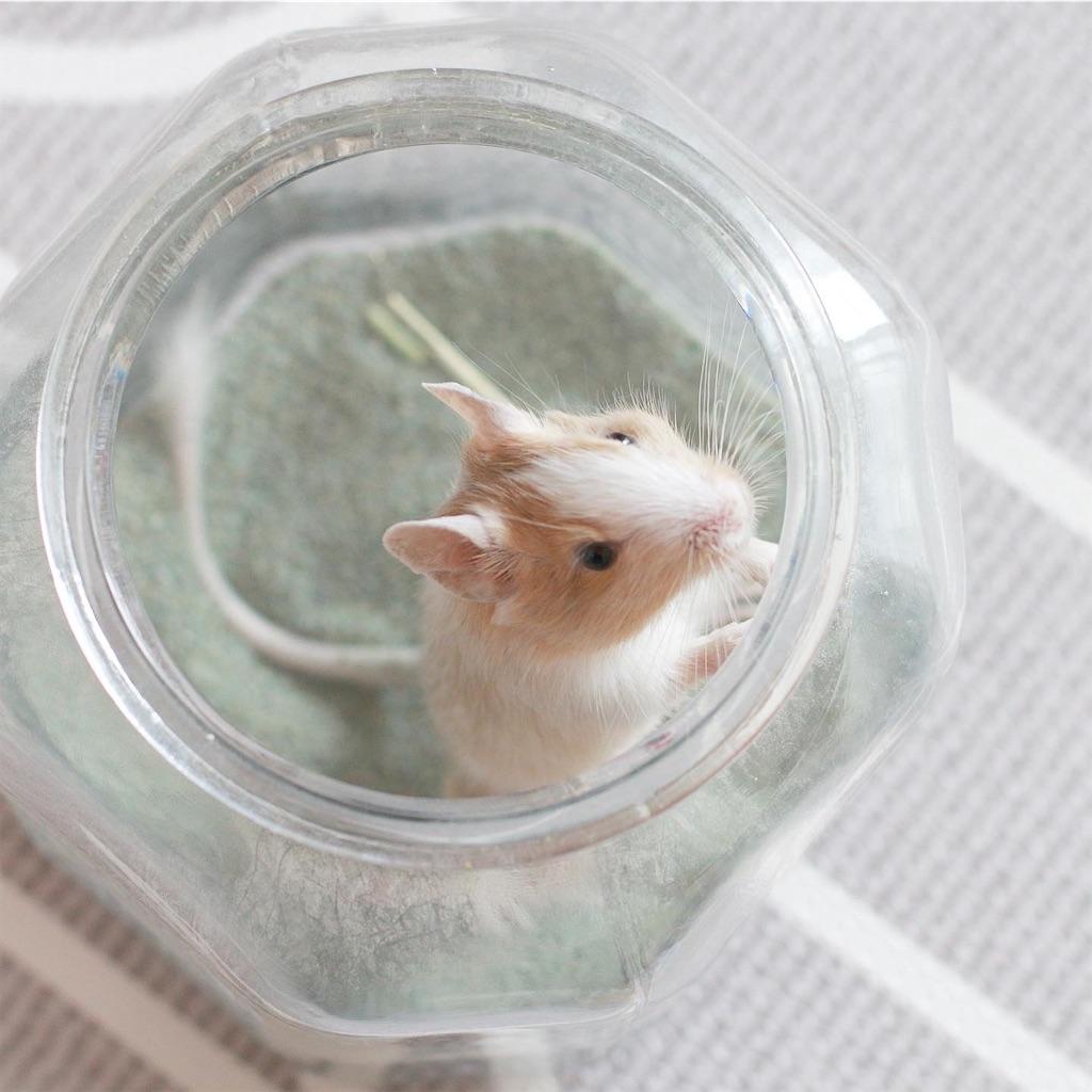 f:id:hamster_nappa:20191210214150j:image