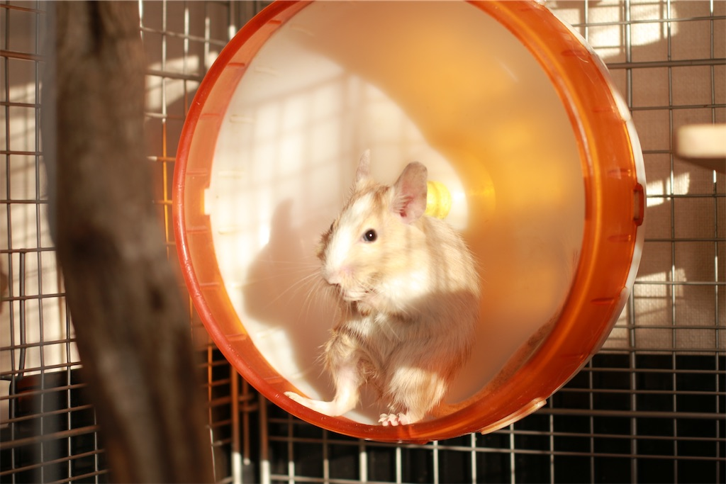 f:id:hamster_nappa:20191211094409j:image