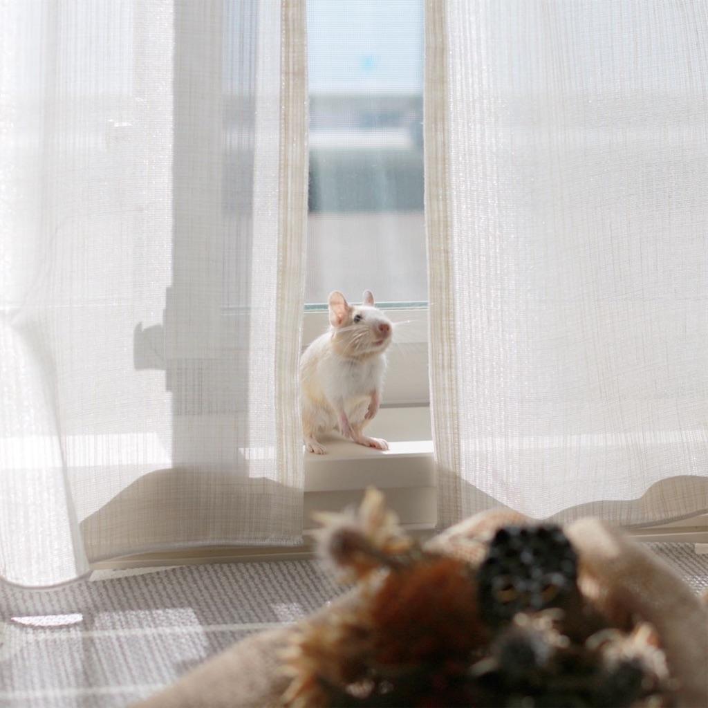 f:id:hamster_nappa:20191211094415j:image
