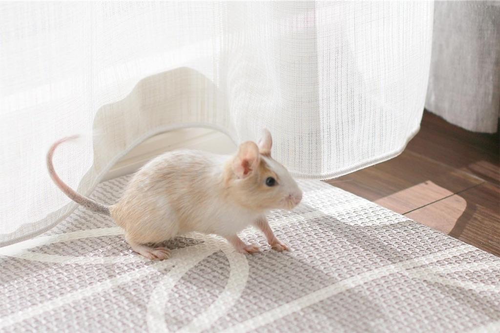 f:id:hamster_nappa:20191211094919j:image