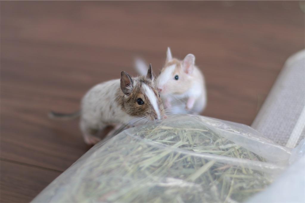 f:id:hamster_nappa:20191213174002j:image