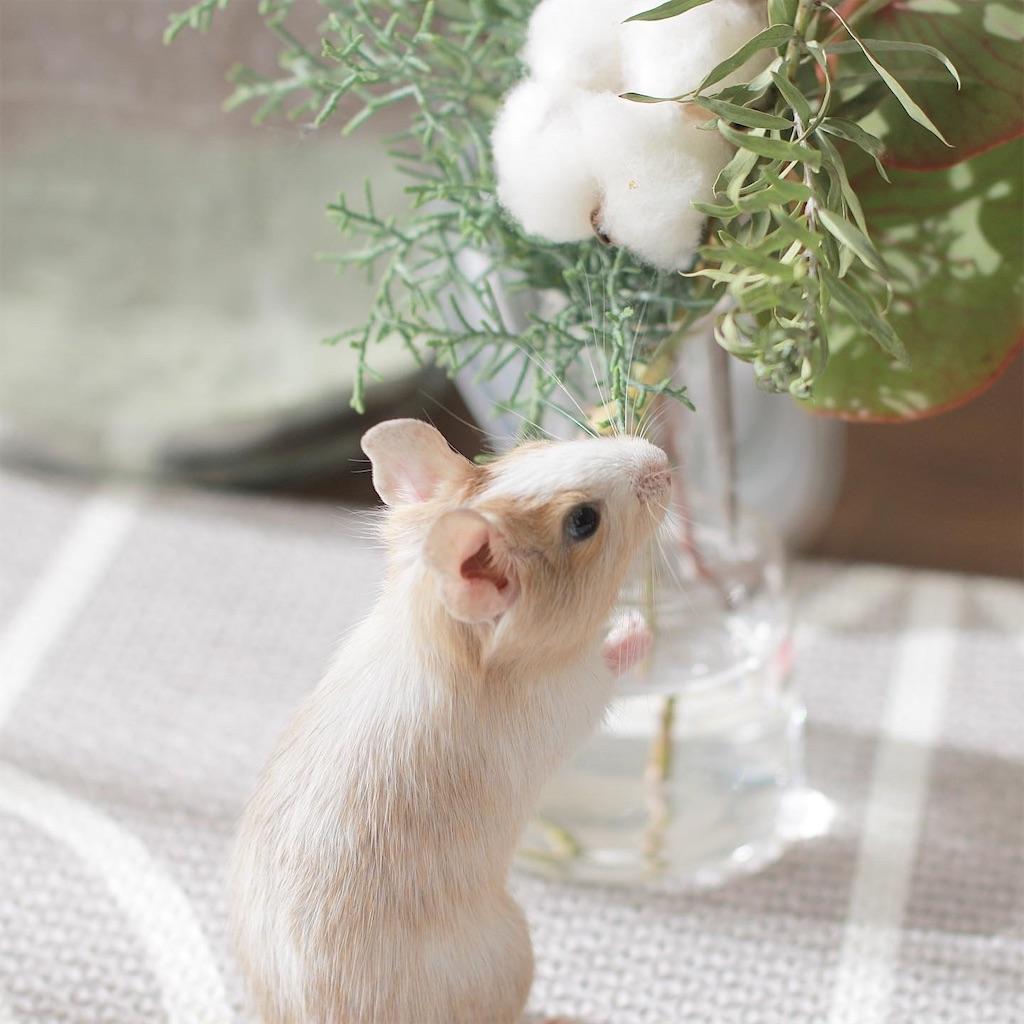 f:id:hamster_nappa:20191213174011j:image