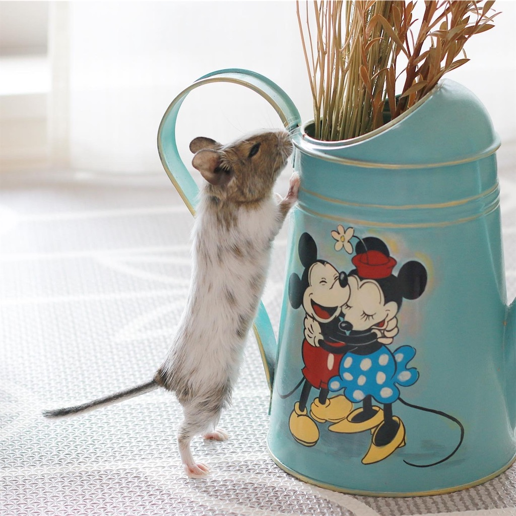 f:id:hamster_nappa:20191213174014j:image