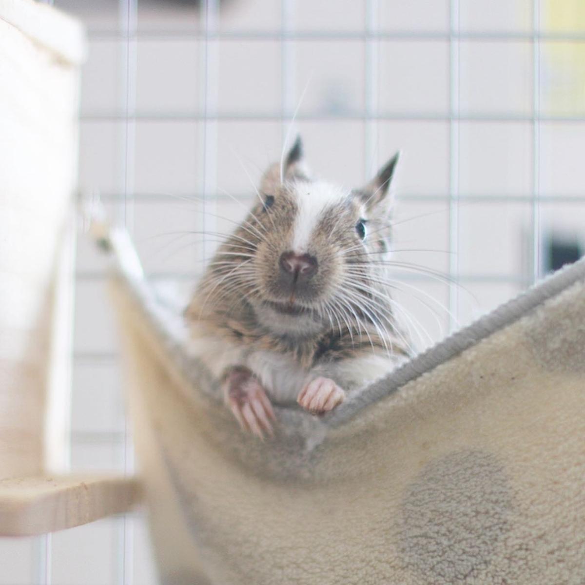 f:id:hamster_nappa:20191226223057j:plain