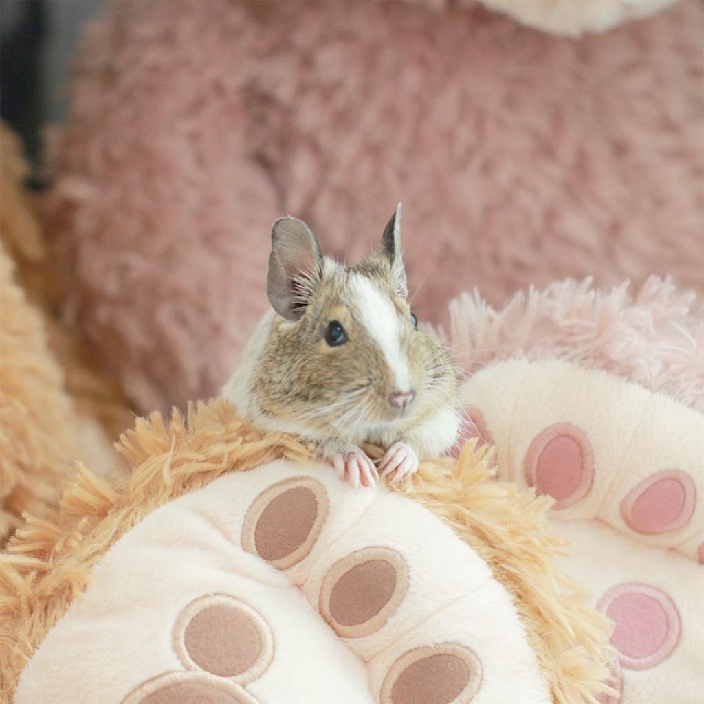 f:id:hamster_nappa:20200117093317j:image