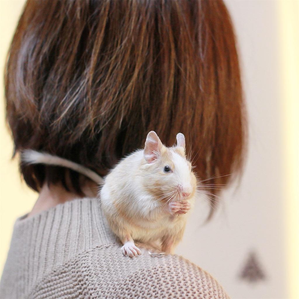 f:id:hamster_nappa:20200117093320j:image