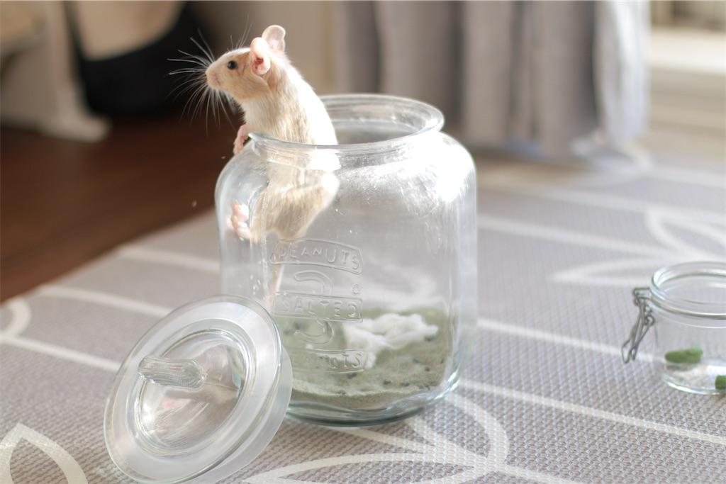f:id:hamster_nappa:20200117093327j:image