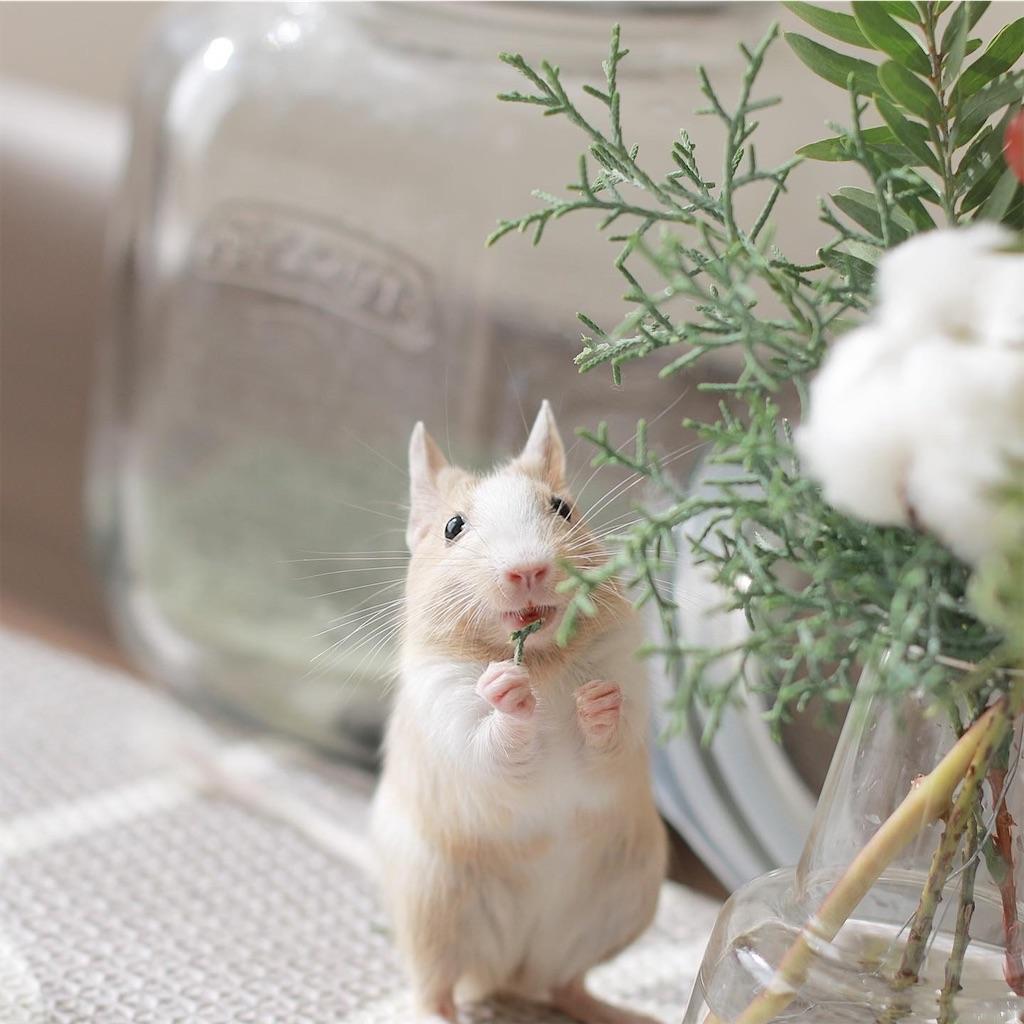 f:id:hamster_nappa:20200117093332j:image