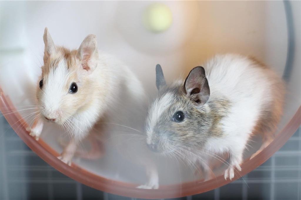 f:id:hamster_nappa:20200117093519j:image