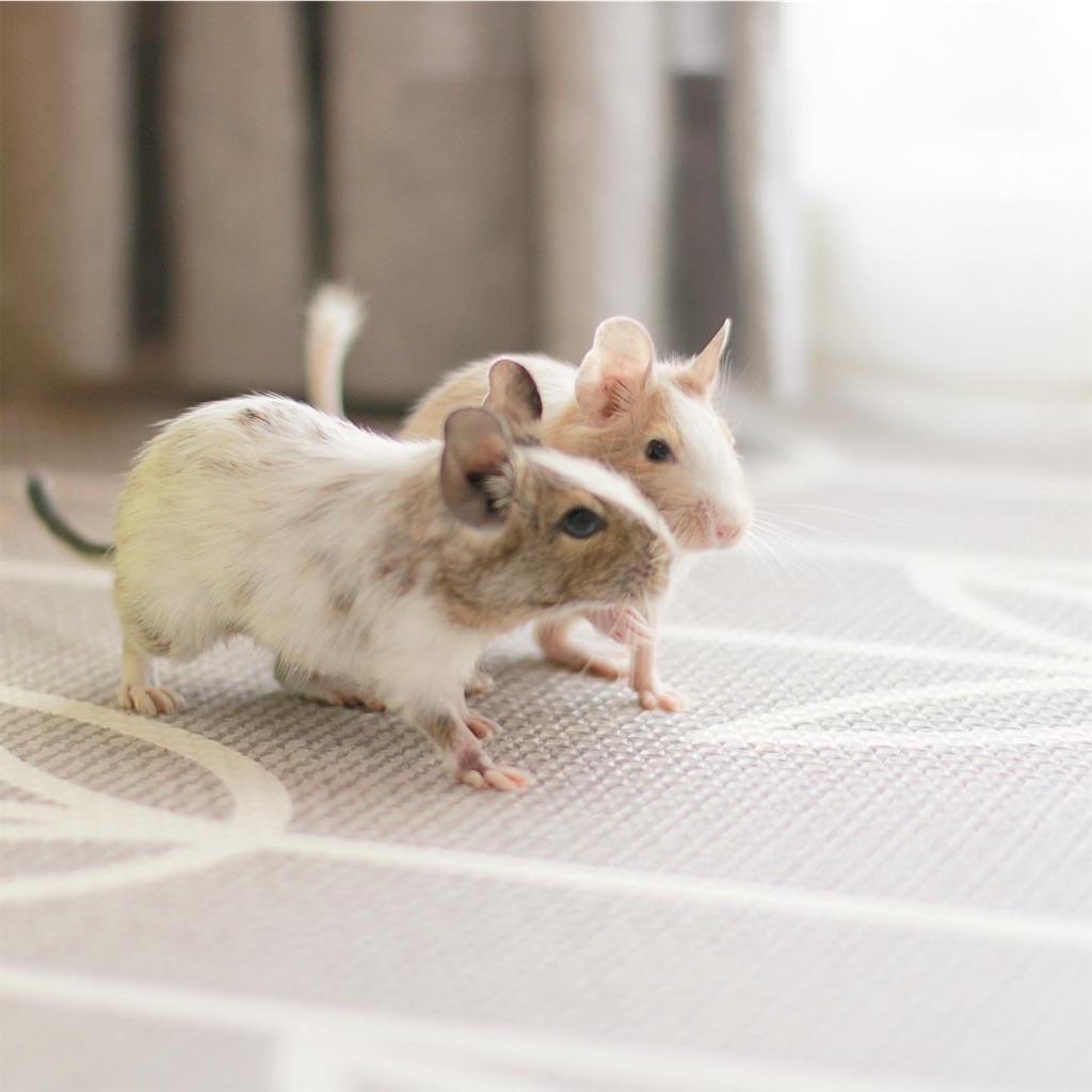 f:id:hamster_nappa:20200117174829j:image