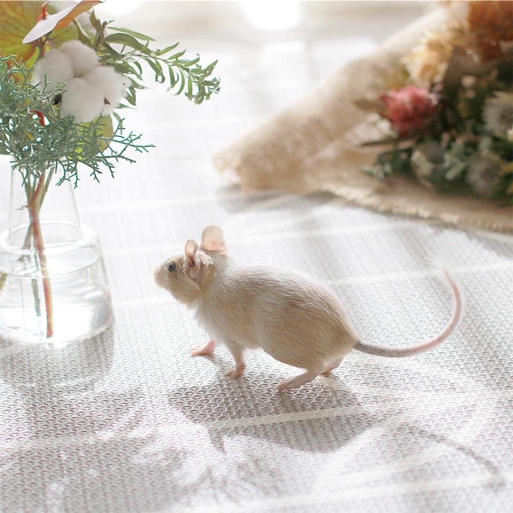 f:id:hamster_nappa:20200117174834j:image