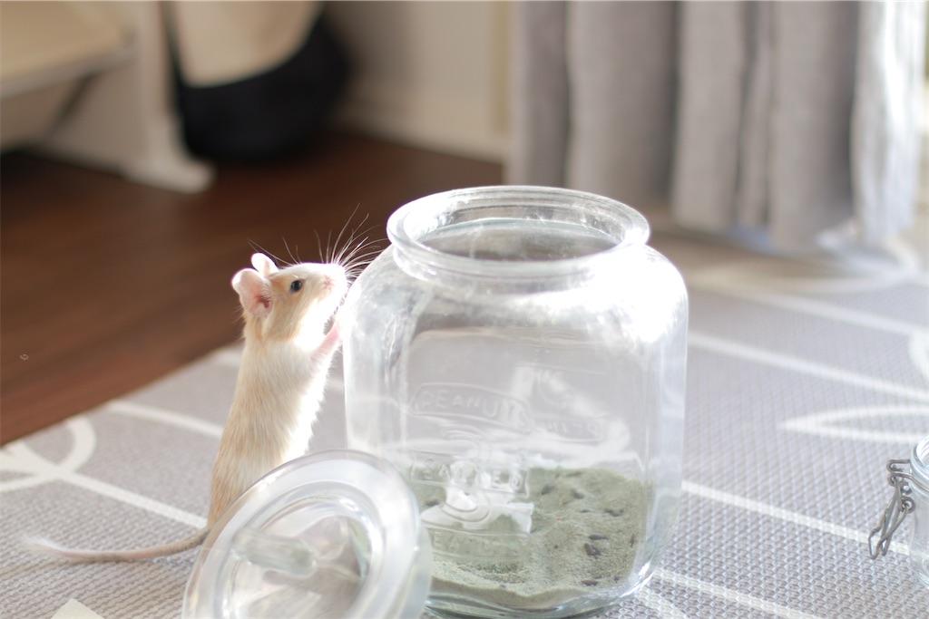 f:id:hamster_nappa:20200118105343j:image