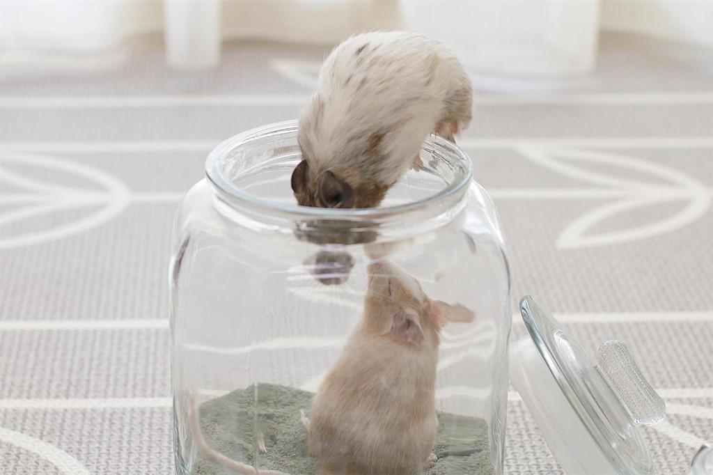 f:id:hamster_nappa:20200118105349j:image