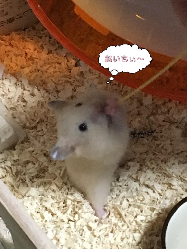 f:id:hamsterlife:20170223101943j:image