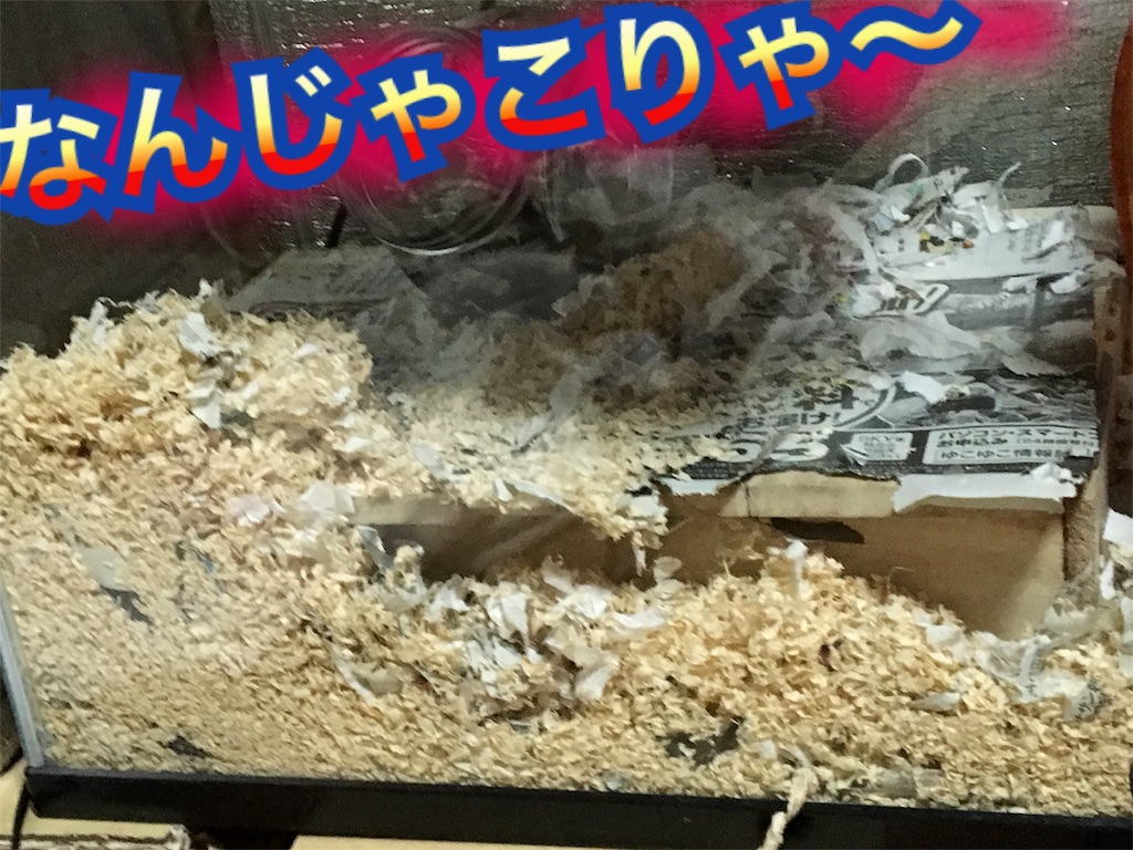 f:id:hamsterlife:20170224074409j:image
