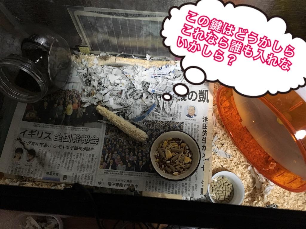 f:id:hamsterlife:20170224085016j:image