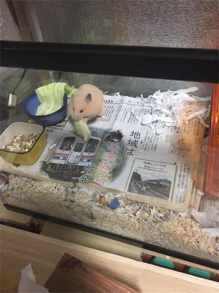 f:id:hamsterlife:20170305081538j:image