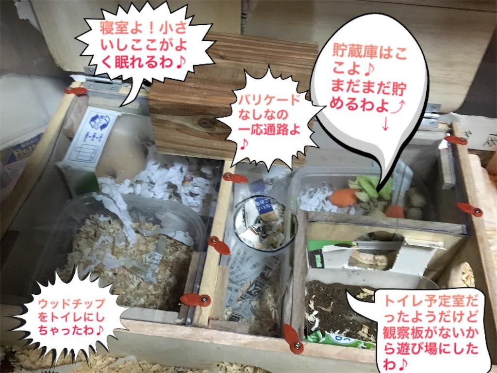 f:id:hamsterlife:20170305124837j:image