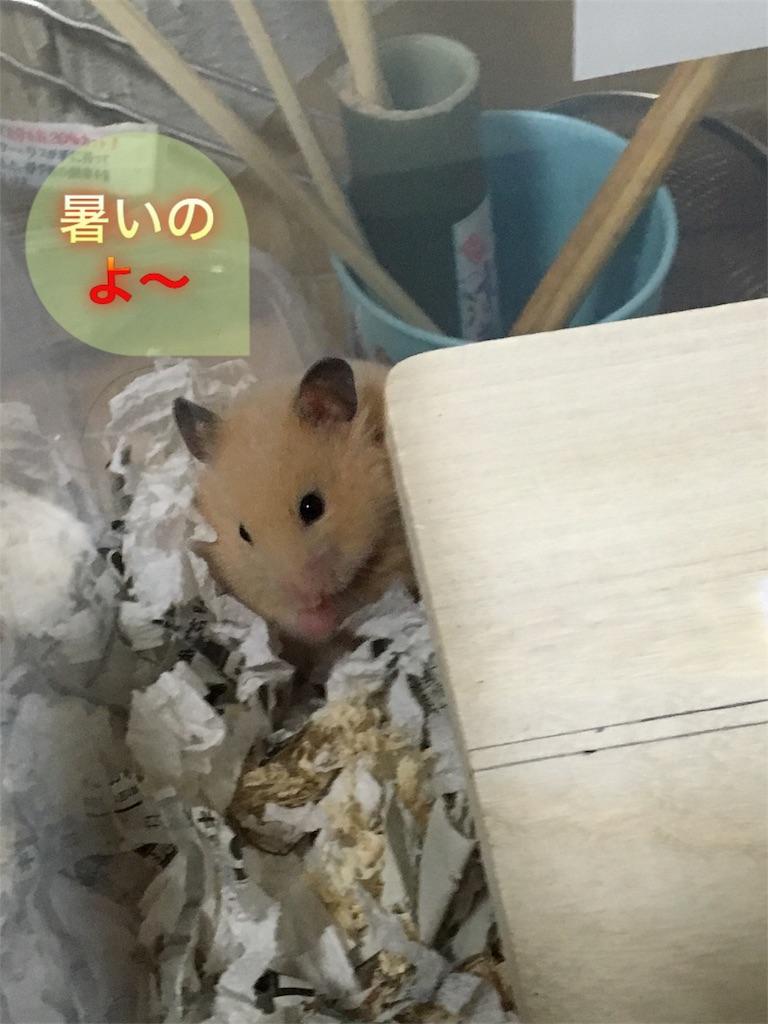 f:id:hamsterlife:20170305132702j:image