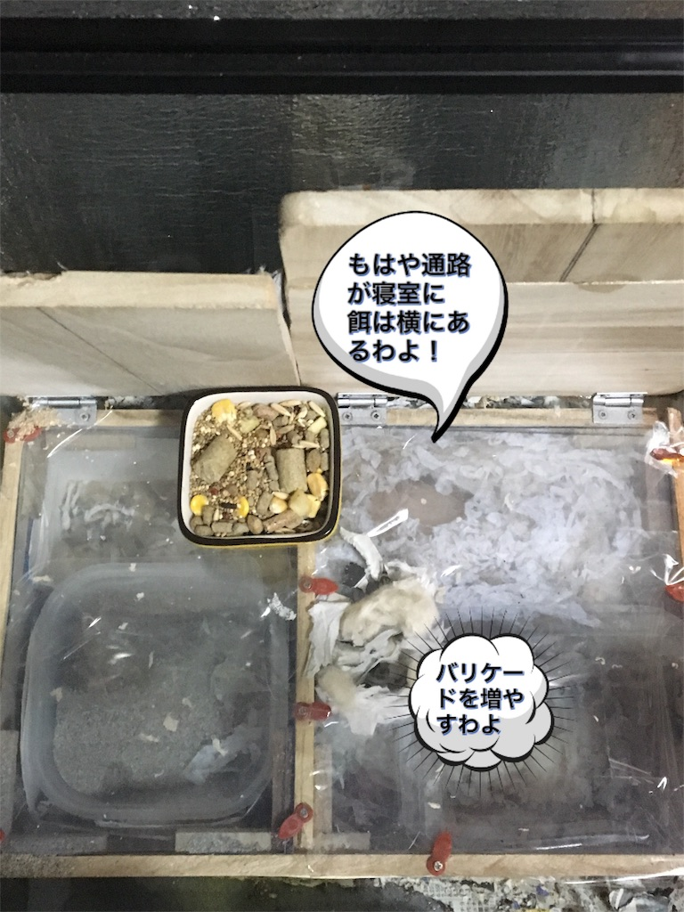f:id:hamsterlife:20170305135618j:image