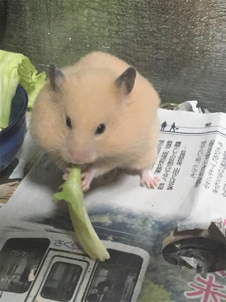 f:id:hamsterlife:20170320225939j:image