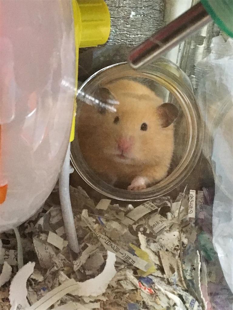 f:id:hamsterlife:20170328225949j:image