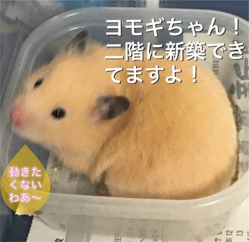 f:id:hamsterlife:20170417085845j:image