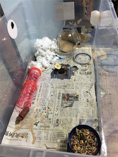 f:id:hamsterlife:20170426103906j:image