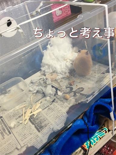 f:id:hamsterlife:20170428061423j:image