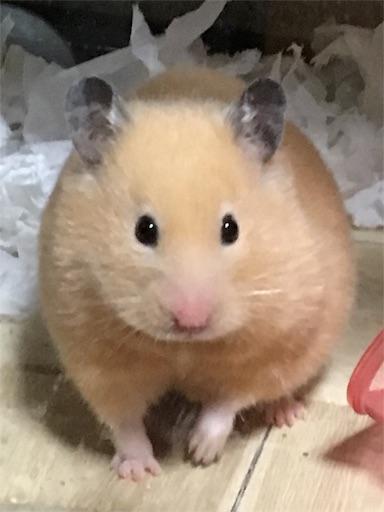 f:id:hamsterlife:20170429072339j:image
