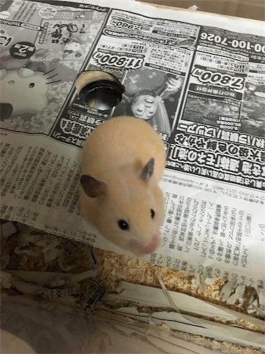 f:id:hamsterlife:20170429081740j:image