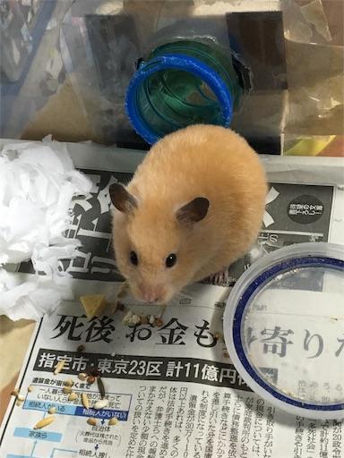 f:id:hamsterlife:20170429232449j:image
