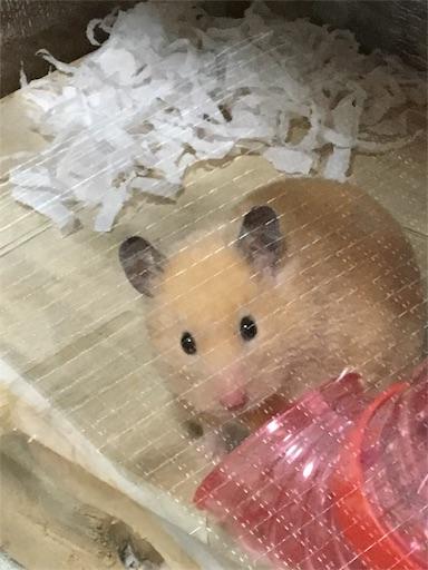 f:id:hamsterlife:20170505144737j:image