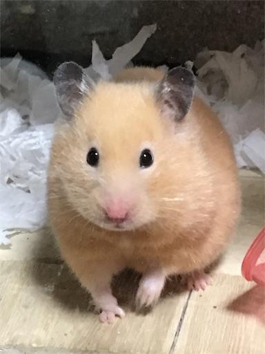 f:id:hamsterlife:20170511105028j:image
