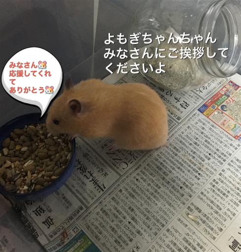 f:id:hamsterlife:20170525162418p:image