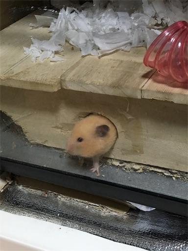 f:id:hamsterlife:20170615085402j:image