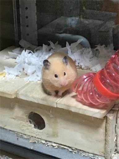 f:id:hamsterlife:20170622154325j:image