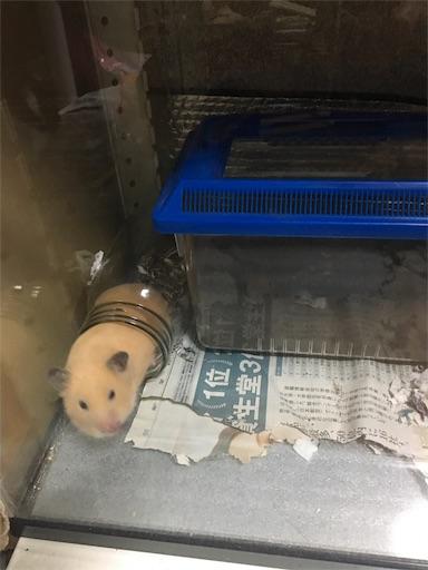 f:id:hamsterlife:20170701062815j:image