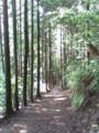 杉木立の道。トラディショナルな熊野古道ですね。