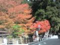 高野山・奥の院。紅葉が色鮮やかでした。
