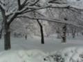 中央ローン、雪に埋まる