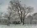 理学部ローン、雪に埋まる