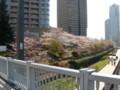 2009, 東京。桜(3)
