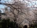2009, 東京。桜(1)