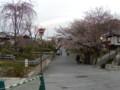 高台寺の近くの桜(2)