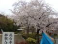 高台寺の近くの桜(1)