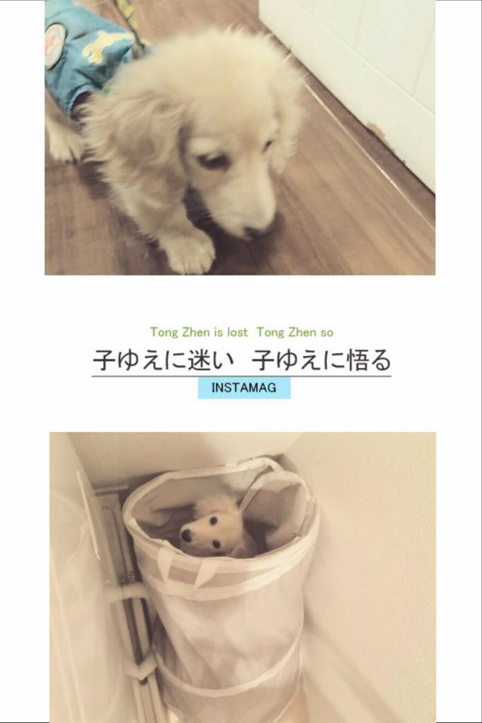 f:id:hamujikun:20160905061807j:plain