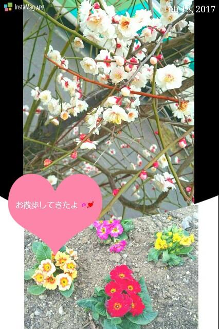 f:id:hamujikun:20170223214348j:image